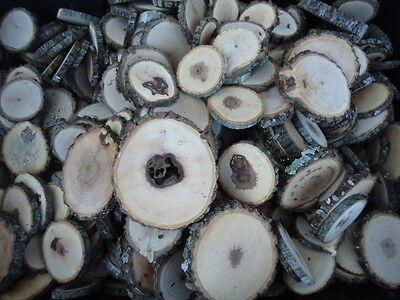 50 irregular tree slices 1