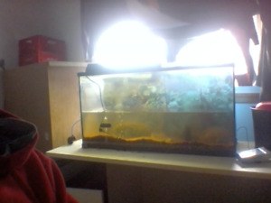 fish tank for 60 $ it's worth the email and pick up .