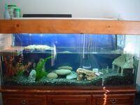 60+ gallon turtle tank needed !!
