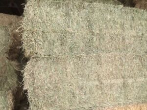 Hay for Sale - Big Squares in Innisfail, AB