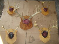 Deer horns for sale