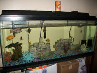 60 Gallon Fish Tank with Stand and Everything you Need to Set Up