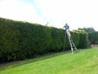 GARDEN TIDY-UP/TALL HEDGE/REPAIRS/HANDYMAN
