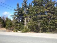 17 Acres of Prime Forested Land - Pouch Cove Line