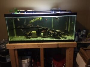 75 gallon Aquarium with DIY stand