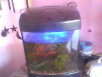 6 cold water fish plus full aquarium and unit.