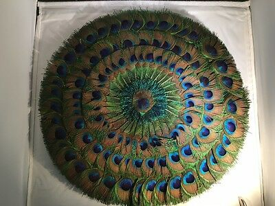 Magnificent Very Large Circular NATURAL PEACOCK FEATHER FAN