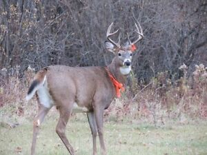Excellent Hunting Land - Gameland Ontario