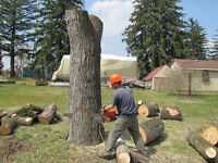 TREE REMOVAL / PRUNING / DUMP RUNS!!!LOWEST RATES