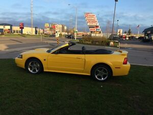 2004 Mustang GT 40th Anniversary Convertible
