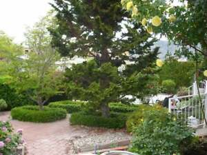 Sprawling Waterfront Home for Rent in Osoyoos
