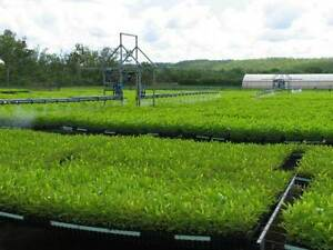 Plant Nursery WIWO / Plantation Trees / Vegetables Acacia Hills Litchfield Area Preview