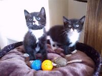 Beautiful Kittens are looking for new home.