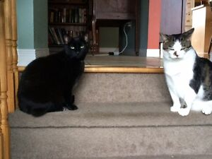 Two adorable cats to rehome - free