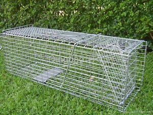Possum, Rat or Cat Trap FOR HIRE. Coorparoo Brisbane South East Preview