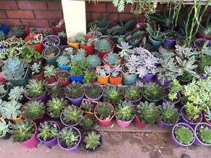 Succulents - Pot Plants Stirling Stirling Area Preview