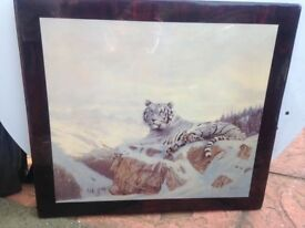 Painting - White Tiger - Fully Resin Coated Excellent Condition