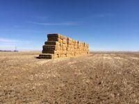 Wheat Straw Squares 3X4X8'S & 3X3X8'S