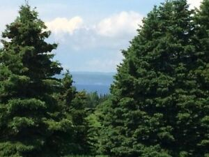 Land For Sale - George's River
