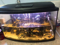 60 L Aquarium includes filter lots of fish and food nets extra also have an external filter