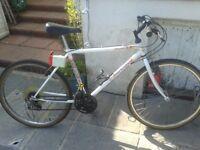 Boys Mercury Mountain Bike