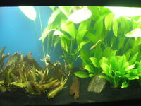 Peter's Reef Pond - FRESHWATER AND SALTWATER