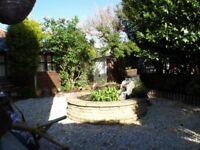 Free Garden Pond and Pump