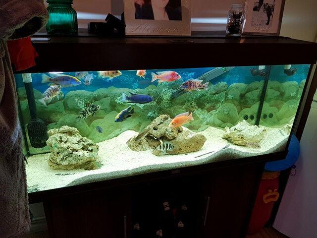 4ft fish tank full setup