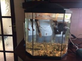 Lovely shaped small fish tank , aquarium with extras and free delivery