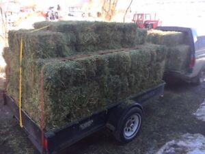 Alfalfa & Hay & Straw For Sale
