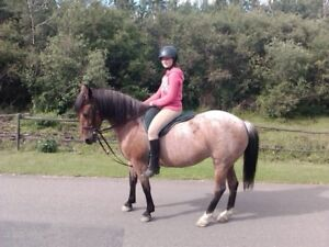 Looking to free lease daughter's horse