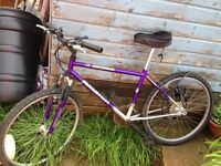 Free Mens Raleigh Bike