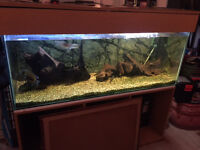 5 Foot Large Fishtank