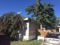 Storm damage tree removal and cleanup