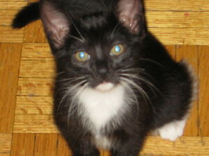 3 kittens in need of new owner