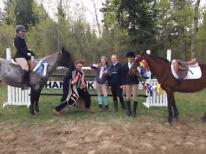 Training & Coaching for Horses & Riders