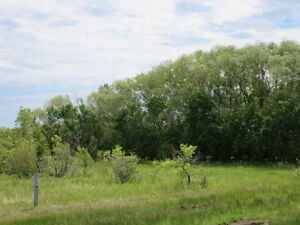 """Teulon"" Treed Vacant Lots 100' X 200' 3 Available ONLY $24,900"