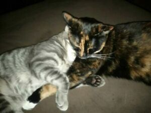Two cats FREE to good home