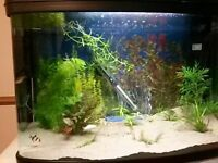 Fish Tank full set up with Tropical fish