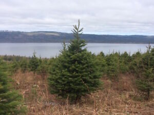 Christmas Tree Farm, Pynn's Brook-Perry/Cherie-NL Island Realty