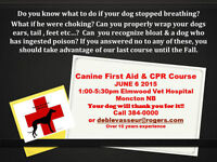Canine First aid and CPR course - over 10 yrs experience