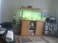240 litre fish tank with community fish internal and external filter