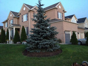 One bedroom Basement apartment for rent $850