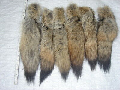 #1 Quality XL Tanned Western Coyote Tails/Crafts/Real USA Fur Tails/Harley parts