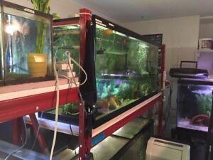 A vendre  - Aquarium de cinq pieds de 125 gallons