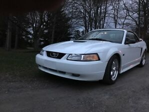 2000 Ford Mustang GT V8 5 Speed Convertible