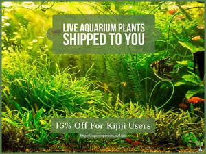 Live Aquarium Plants Shipped To You