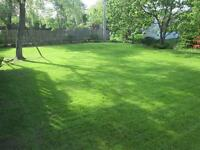 *>LAWN CARE GREAT SERVICE GREAT VALUE<*