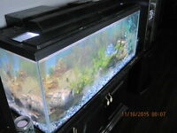 72  GALLON TANK  with fish and extras