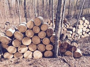 Poplar Firewood For Sale $40 Short Box P/U